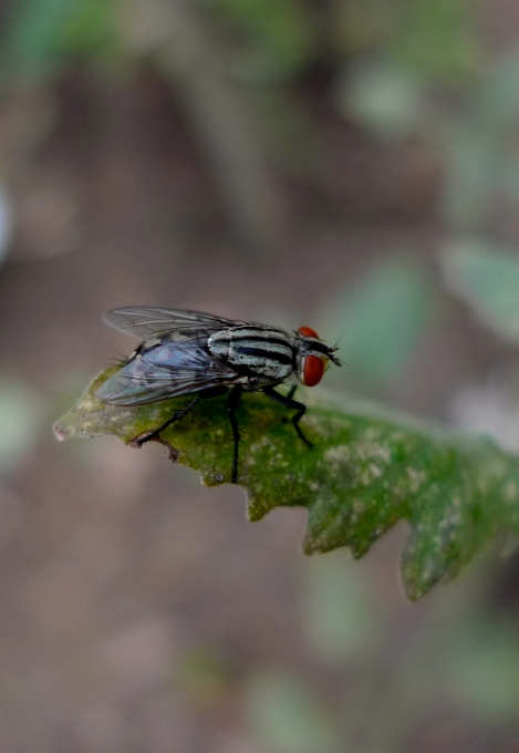 The beautiful fly…