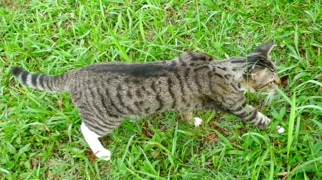 He is our lovely family member, who love to have a walk in garden..