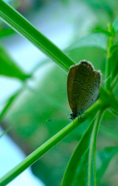 Little butterfly… So cute!