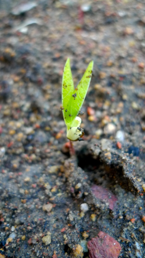Almost all the seed sprout… The new beginning of life...