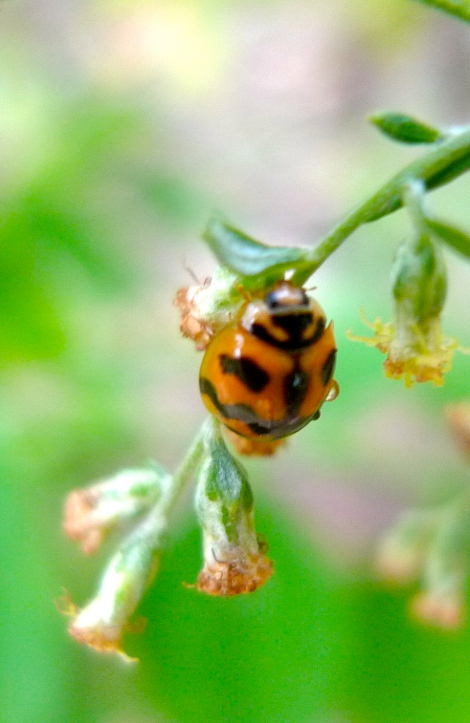 How alive is the beautiful ladybird!