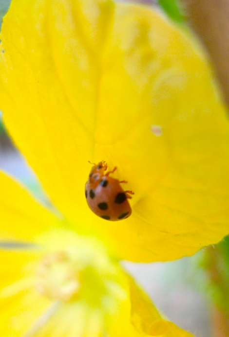How lovely is the ladybird!