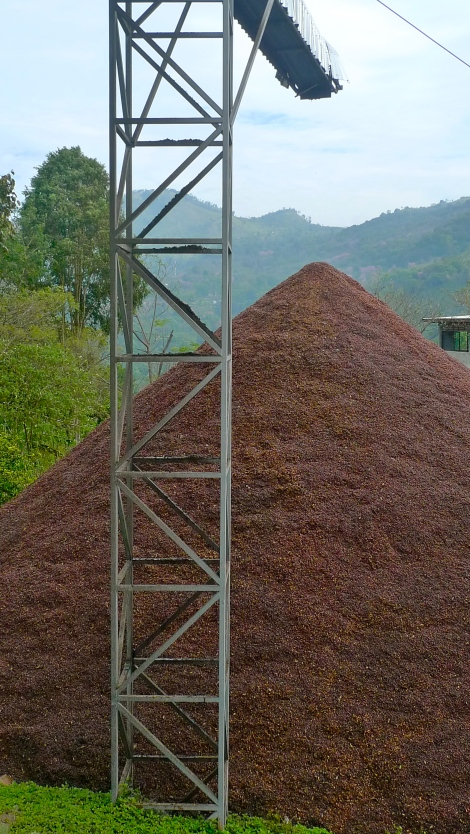 This is the coffee pulp. We are happy to find out that the farmers will use this as compost to give natural nutrition to coffee plant.