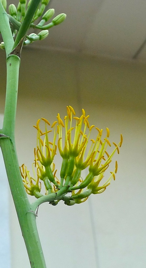 Our family love to look up to the beautiful flowers, its about 2 storey height!