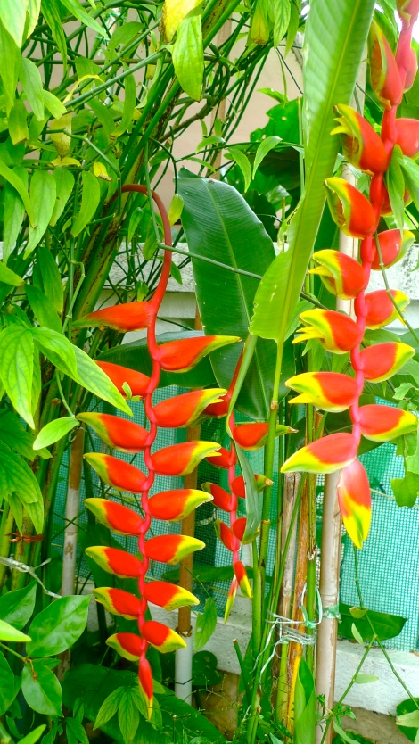 Natural firecracker! Awesome!