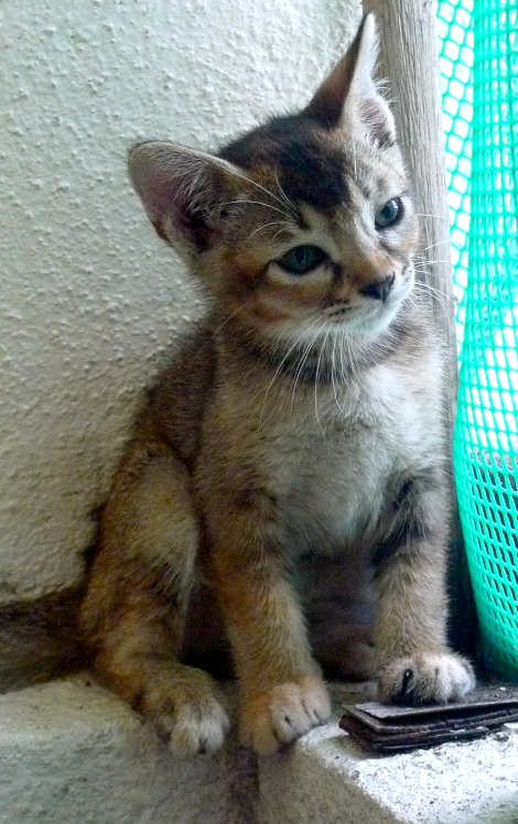 """We named our new family member as """"Ms Mimi""""..."""