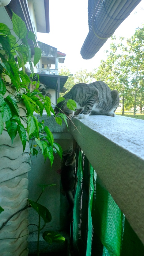 Ms Mimi wanted to follow his brother, to sit at the backyard.