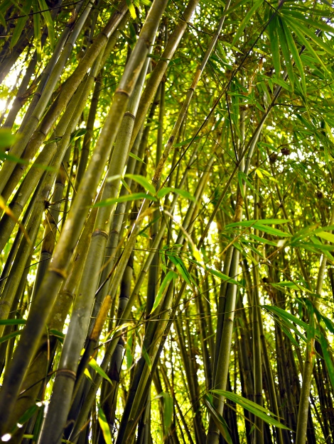 How beautiful is the bamboo...Amazing nature! Photo courtesy from sis Nicole.