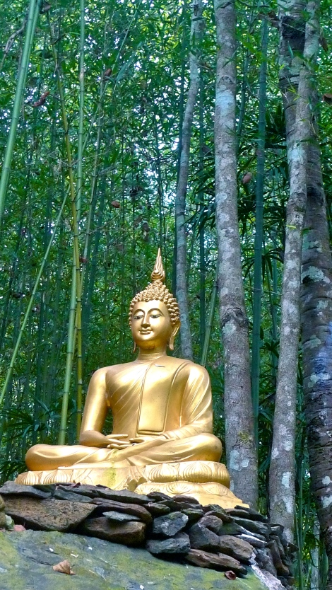 """""""No one saves us but ourselves. No one can and no one may. We ourselves must walk the path."""" By Buddha"""