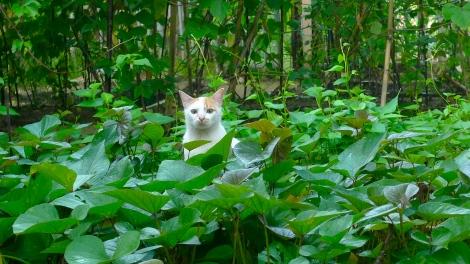 Our lovely cat, Little White….