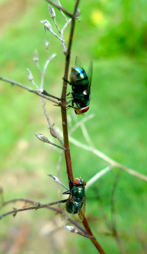 "Two little fly in our garden… ""They are chatting with each other…"""