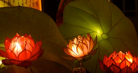 May you be like the lotus light, bright up the surrounding! You can!
