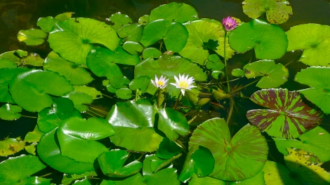 Look closely to the beautiful lotus flower!