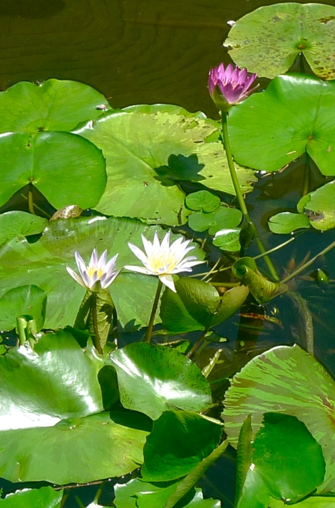 No matter how dirty is the mud water, you can see the beautiful lotus flower and smell the fragrance of flowers. Look for positive angle in life!