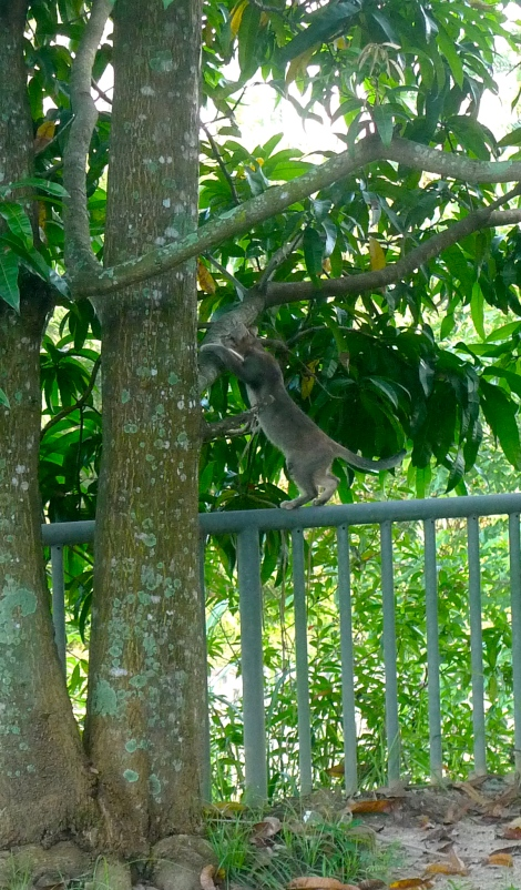 Look at her, she jumped up to the fence and hold tied to tree to balance herself...