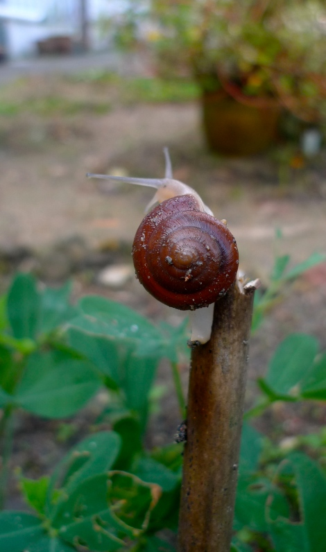 What a lovely pose from snail! So amusing!