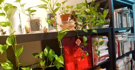 My little gem and little paradise  at home with lovely plant and also good books like good nutrient to mind.