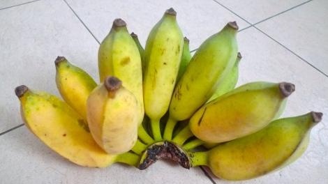 How beautiful is the home-grown Banana!