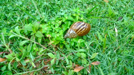 A snail is relaxing in green grass?