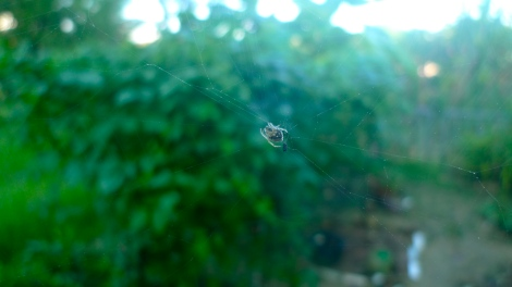 I enjoyed looking at the spider web….