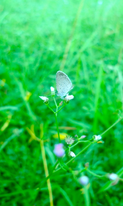 I enjoyed looking at the little butterfly with the beautiful tiny flowers.