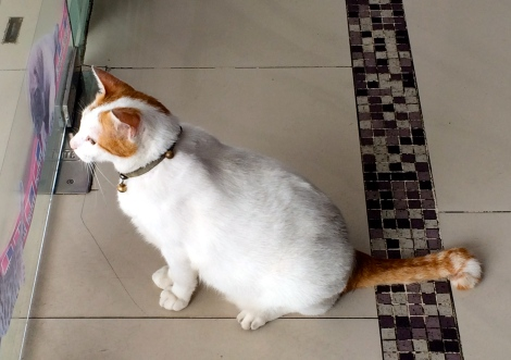 The beautiful resident cat in Vet! He looked awesome!