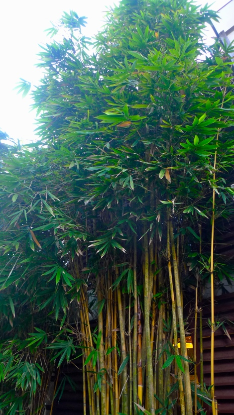 You need to always trim and care for the bamboo, if not it'll grow like a little forest and some might even bend down. As such, be open minded and appreciated when someone sharing your shortcoming. Treat this as nutrient and transform.