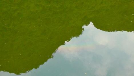 A beautiful rainbow after a heavy rain...