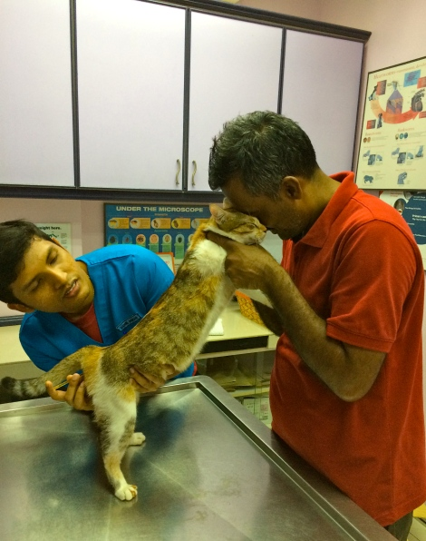 I am touched when I looked at this moment. The stray cat, 123 was so friendly when she was examined by Vet.