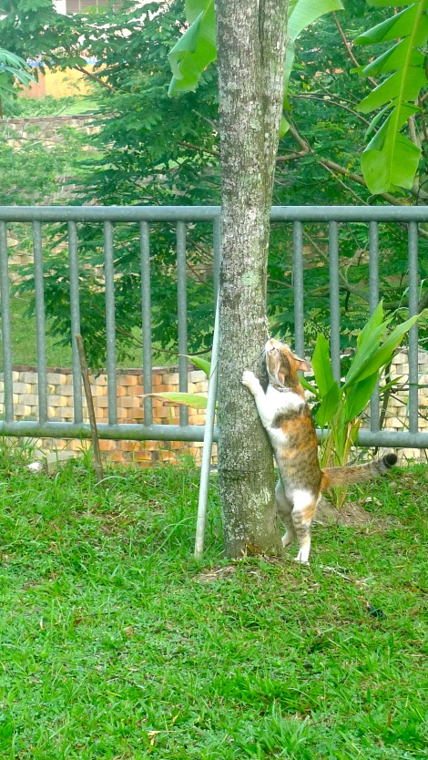 Miss San San is trying to climb up a tree. However, She failed.