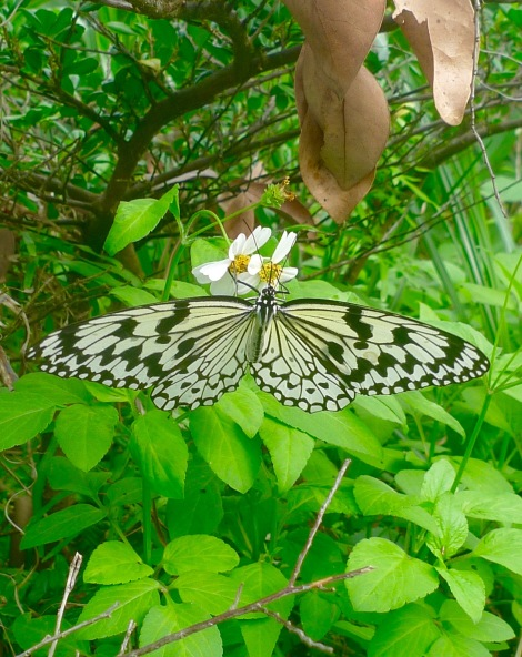 A beautiful butterfly being attracted by the nectar of flower. Who do you want to attract in your life? You can decide!