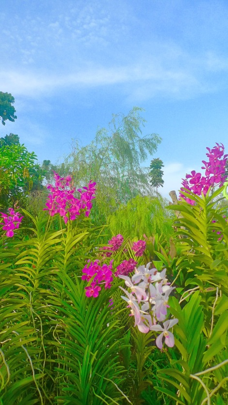 Are you tempted so much to pluck the flowers? Why not observe the beauty of flowers?