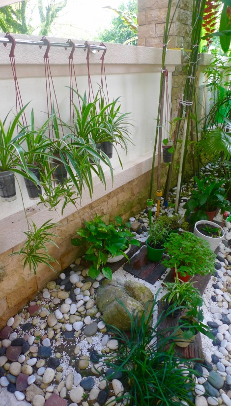 Once I open my kitchen door, I look at the little zen garden, I am so refresh and  feel the unconditional happiness. The blessing from nature!