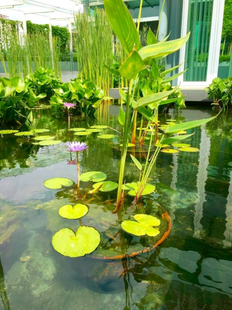 Why not preserve the public area like your house?  How peaceful to look at such a nice and clean pond!