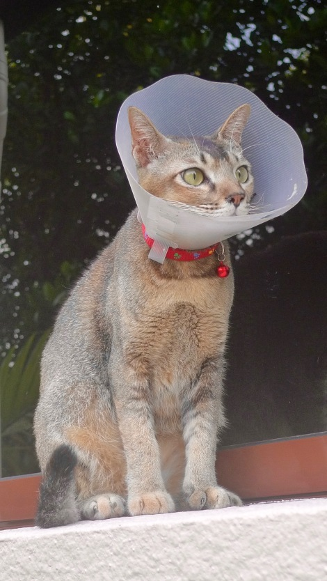 Miss Mimi is sick since Mar and hopefully she can recover soon from fungal infection. Health is wealth!