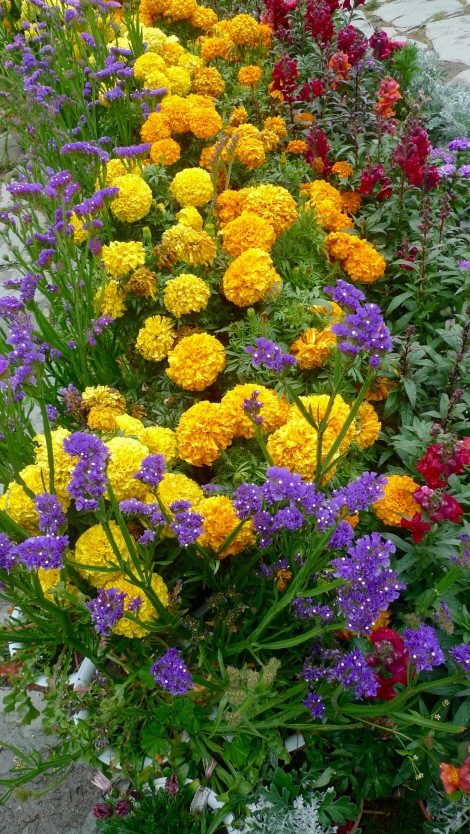 Many types of flowers to enhance the beauty of nature. No conflicting!