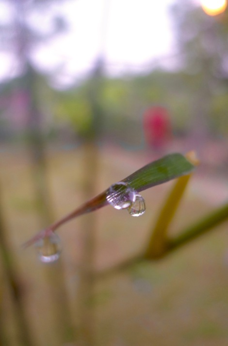 Our life is just like morning dew, we can disappear anytime. Treasure your life, be self benefit and benefit others!
