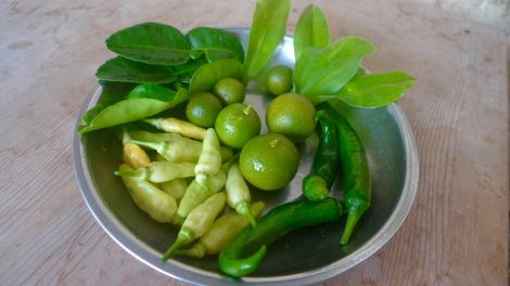 Home grown organic herbs like Organic Kaffir leaves, organic cekur leaves, great to cook curry. Organic lime  and different type of chill. So fresh!