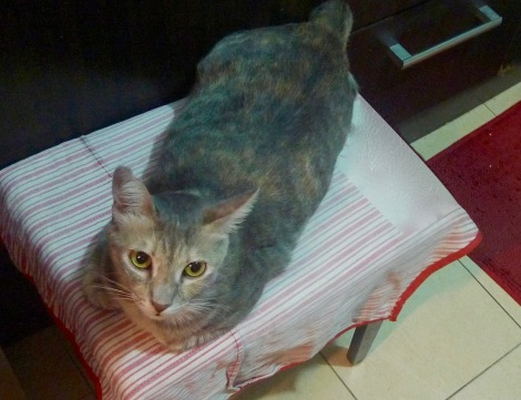 Miss SiSi will sit quietly while accompany me in kitchen. She is the best companion.