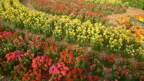 How beautiful are the colourful flowers!!!