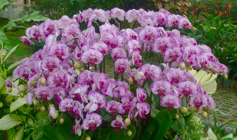 How do you feel when you look at the blossom of orchid flowers?
